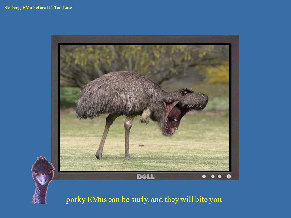 porky EMus can be surly, and they will bite you Slashing EMu before It's Too Late