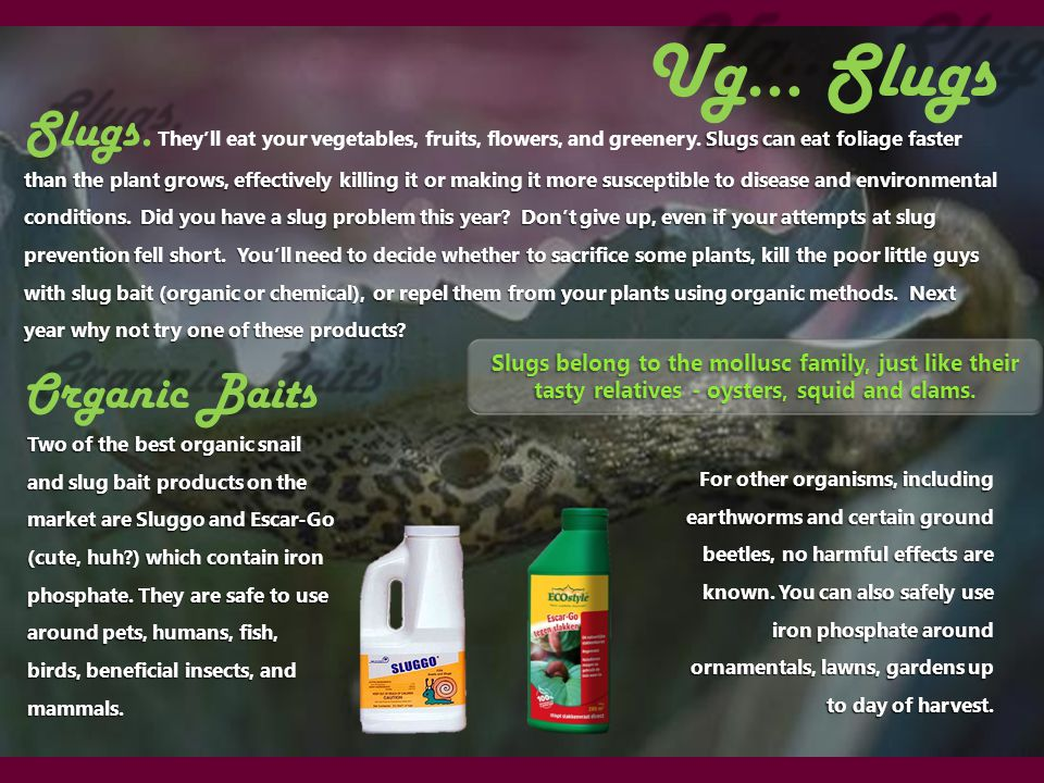 Ug… Slugs Two of the best organic snail and slug bait products on the market are Sluggo and Escar-Go (cute, huh ) which contain iron phosphate.