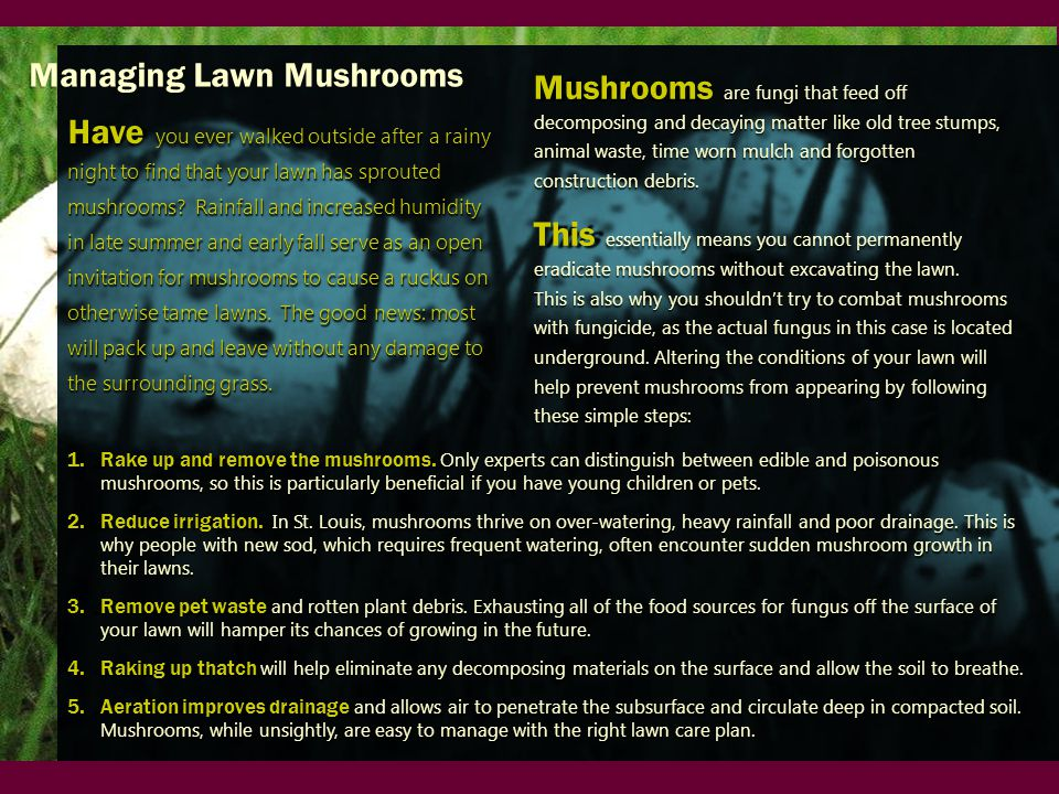 1.Rake up and remove the mushrooms.
