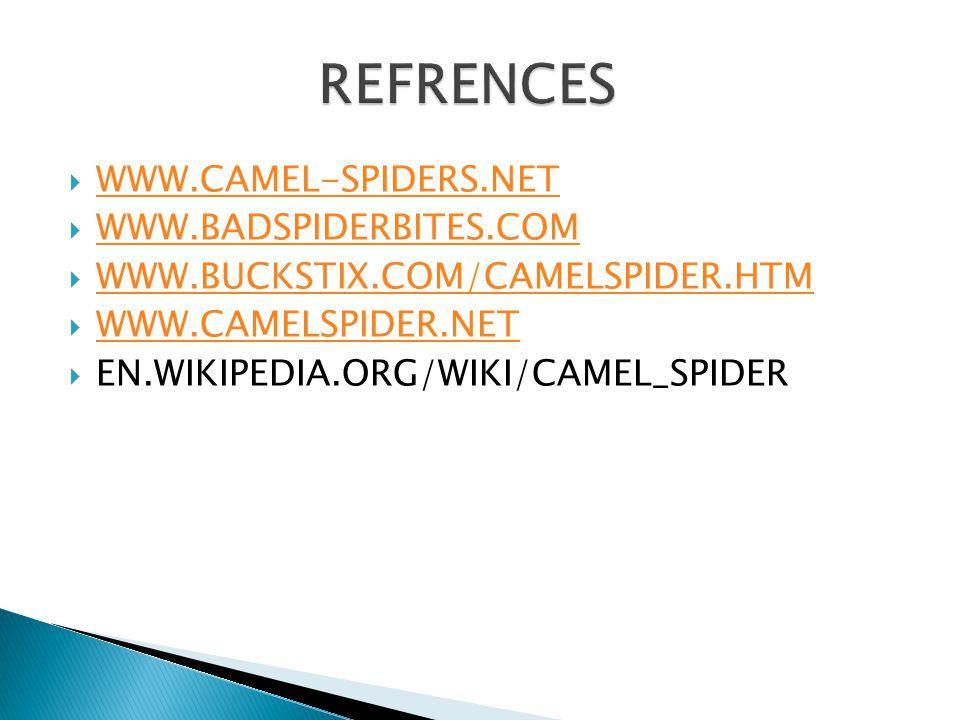  WWW.CAMEL-SPIDERS.NET WWW.CAMEL-SPIDERS.NET  WWW.BADSPIDERBITES.COM WWW.BADSPIDERBITES.COM  WWW.BUCKSTIX.COM/CAMELSPIDER.HTM WWW.BUCKSTIX.COM/CAMELSPIDER.HTM  WWW.CAMELSPIDER.NET WWW.CAMELSPIDER.NET  EN.WIKIPEDIA.ORG/WIKI/CAMEL_SPIDER