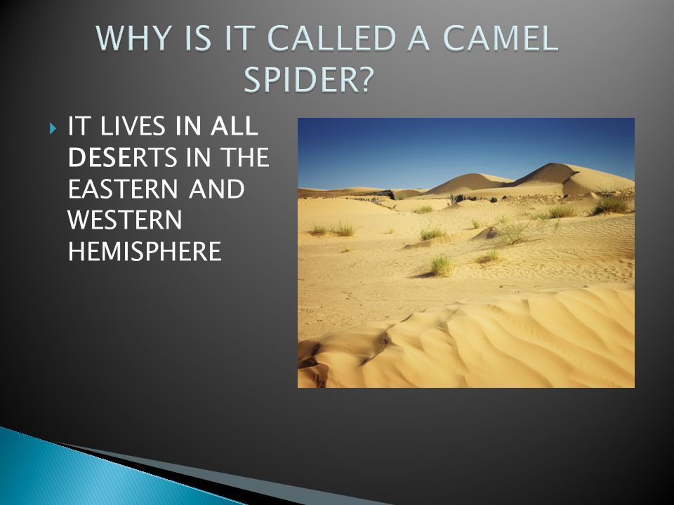  IT LIVES IN ALL DESERTS IN THE EASTERN AND WESTERN HEMISPHERE
