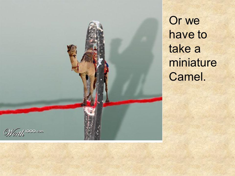 Or we have to take a miniature Camel.