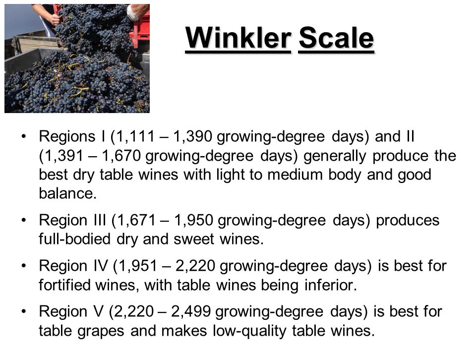 Winkler Scale Regions I (1,111 – 1,390 growing-degree days) and II (1,391 – 1,670 growing-degree days) generally produce the best dry table wines with light to medium body and good balance.