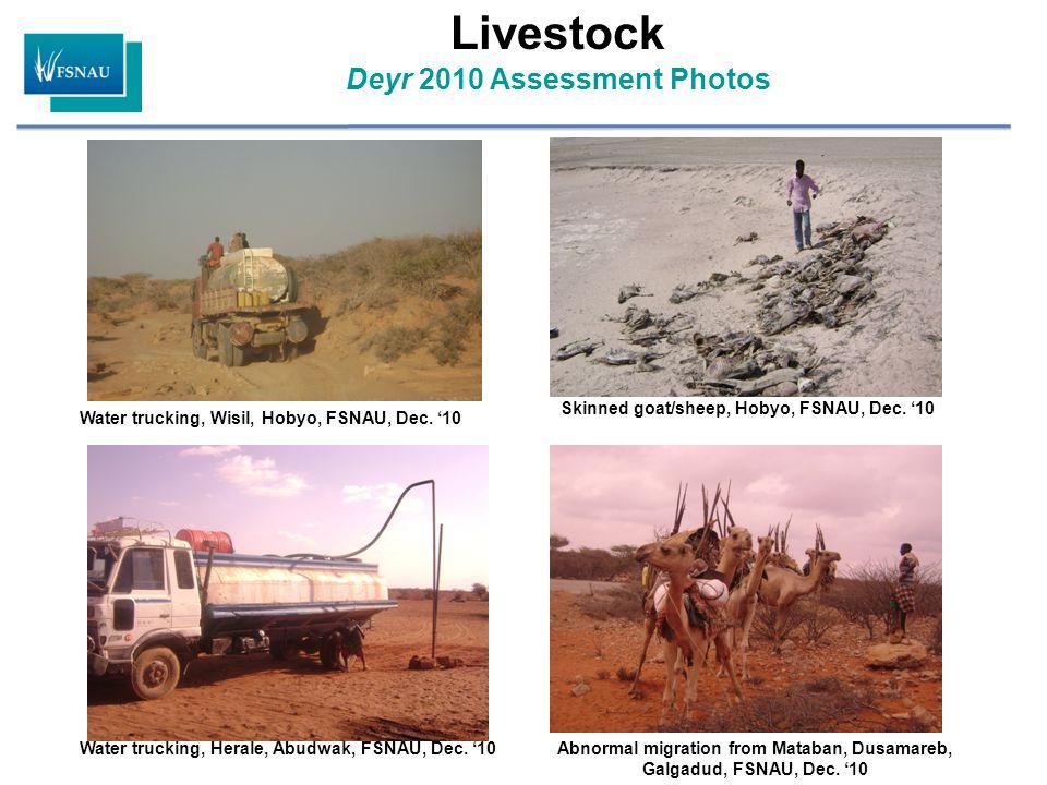 Livestock Deyr 2010 Assessment Photos Water trucking, Wisil, Hobyo, FSNAU, Dec. '10 Skinned goat/sheep, Hobyo, FSNAU, Dec. '10 Water trucking, Herale,