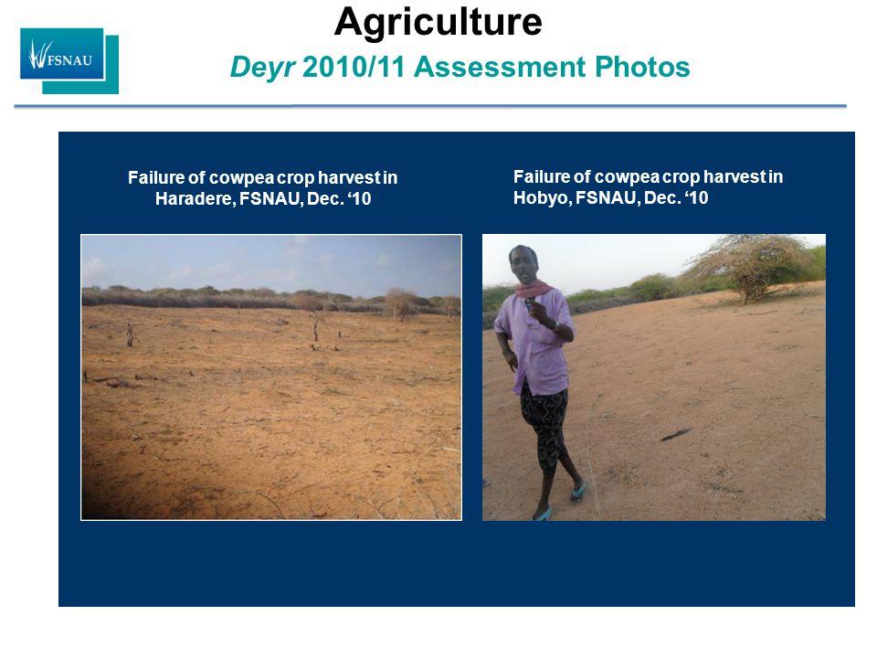 Deyr 2010/11 Assessment Photos Agriculture Failure of cowpea crop harvest in Hobyo, FSNAU, Dec. '10 Failure of cowpea crop harvest in Haradere, FSNAU,