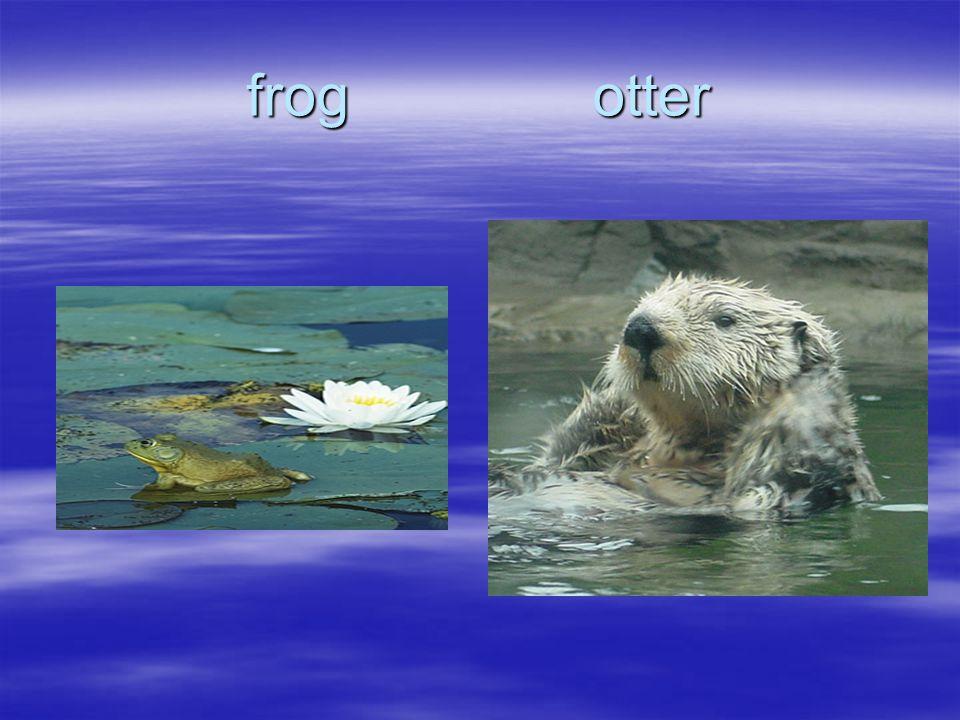 Yes  bat  camel  wolf  Whale  Sea lion No  woodpecker  swan  Canada Goose  Salamander  lizard