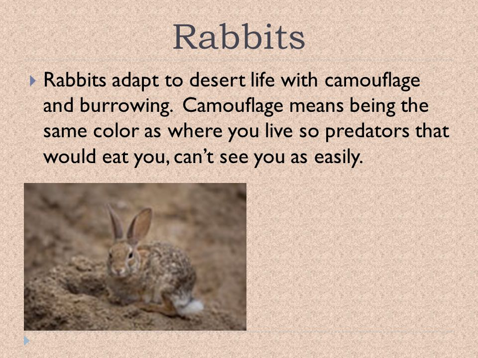 Desert Reptiles God did not make reptiles food for the Children of Israel.