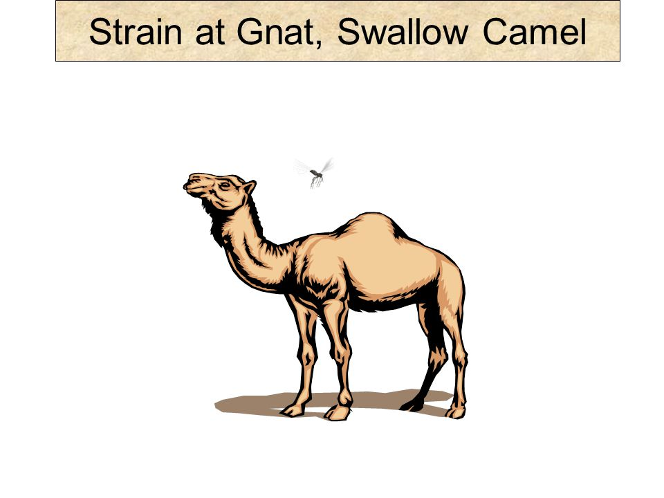 Some in their meticulosity would, indeed, carefully filter out the small gnat (probably the larva stage meant) and would gulp down the large camel.