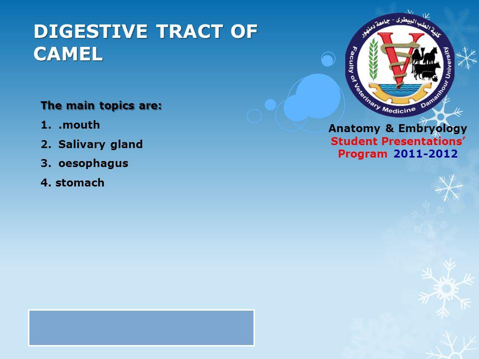 Contemporary Camel Stomach Anatomy Photos - Anatomy And Physiology ...