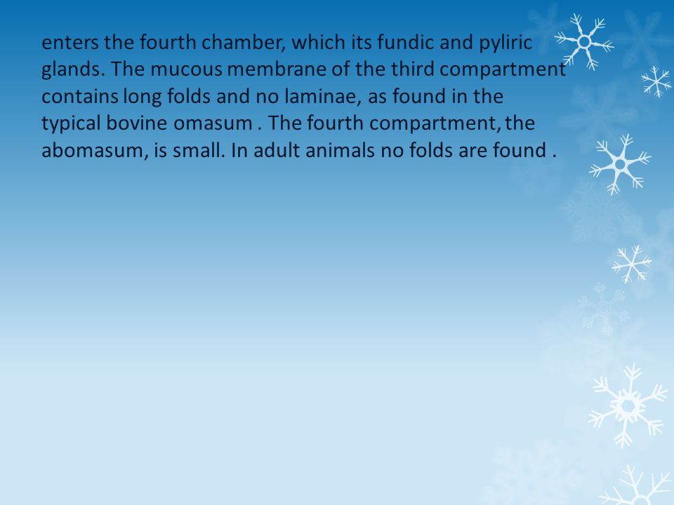 enters the fourth chamber, which its fundic and pyliric glands.