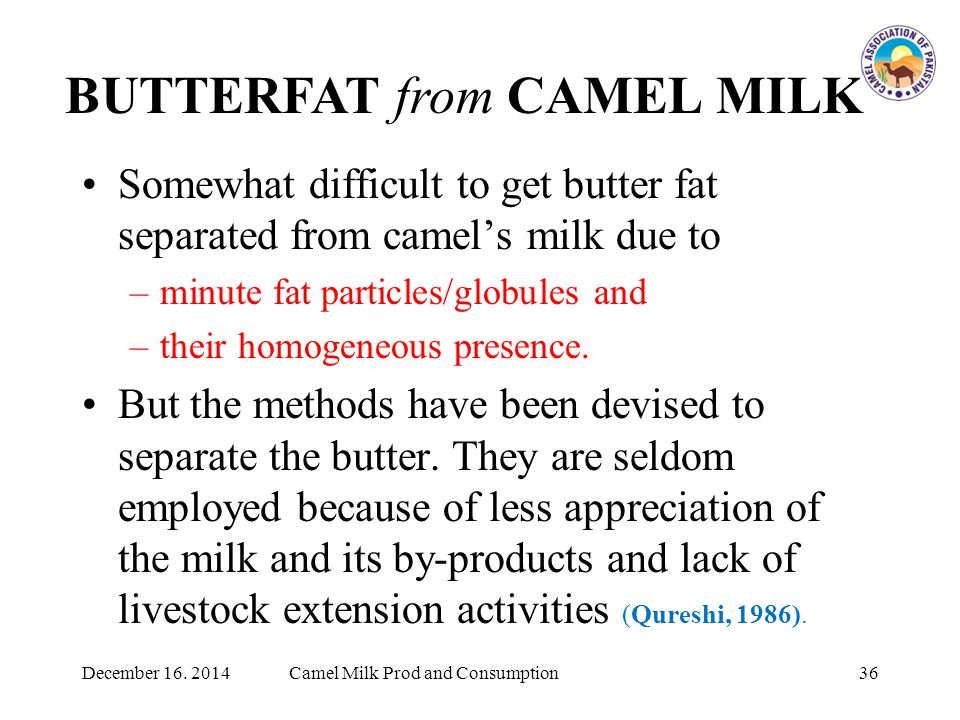 Somewhat difficult to get butter fat separated from camel's milk due to –minute fat particles/globules and –their homogeneous presence.
