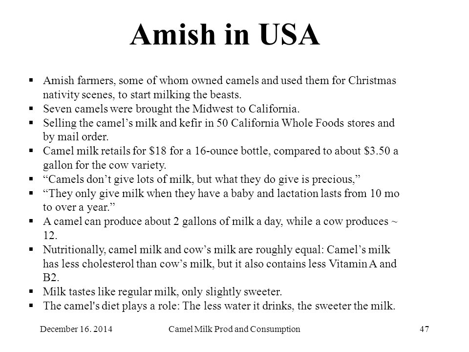 Camel Milk Prod and Consumption47 Amish in USA  Amish farmers, some of whom owned camels and used them for Christmas nativity scenes, to start milking the beasts.