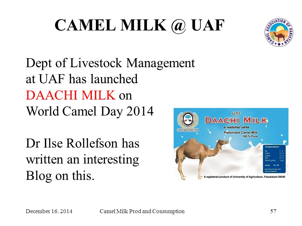 CAMEL MILK @ UAF 57Camel Milk Prod and Consumption Dept of Livestock Management at UAF has launched DAACHI MILK on World Camel Day 2014 Dr Ilse Rollefson has written an interesting Blog on this.