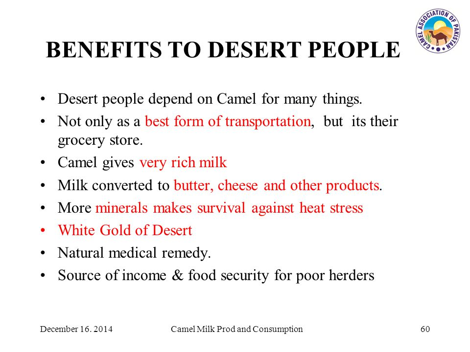 BENEFITS TO DESERT PEOPLE Desert people depend on Camel for many things.