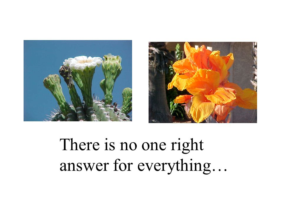 There is no one right answer for everything…
