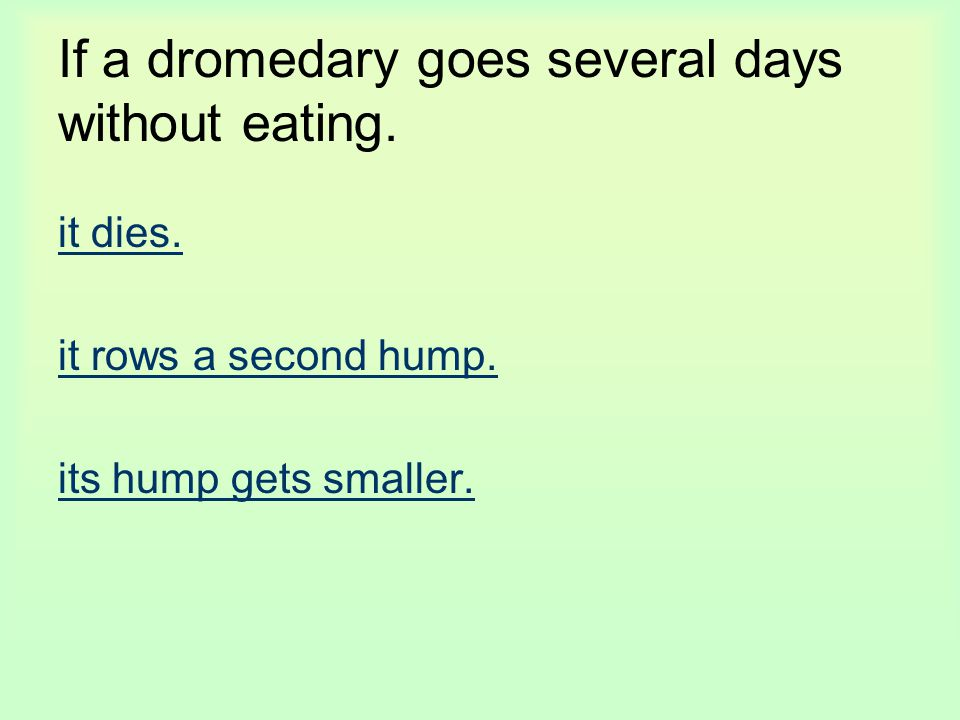 If a dromedary goes several days without eating. it dies. it rows a second hump. its hump gets smaller.
