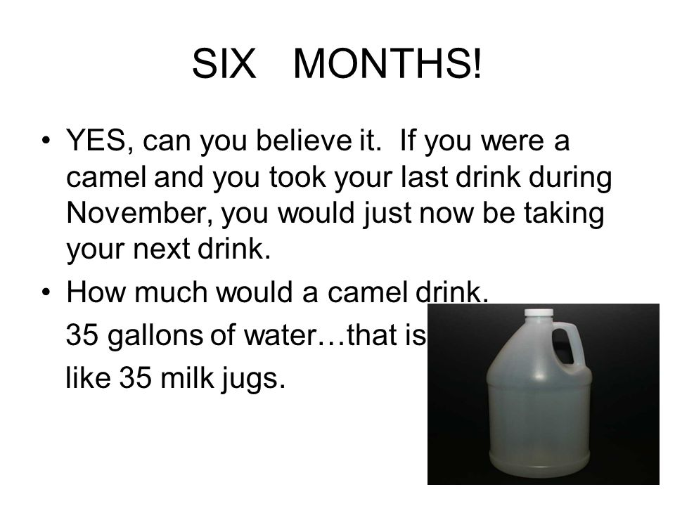 SIX MONTHS! YES, can you believe it. If you were a camel and you took your last drink during November, you would just now be taking your next drink. H