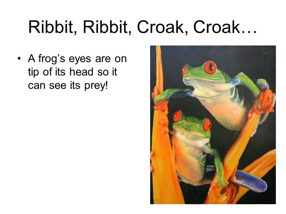 Ribbit, Ribbit, Croak, Croak… A frog's eyes are on tip of its head so it can see its prey!