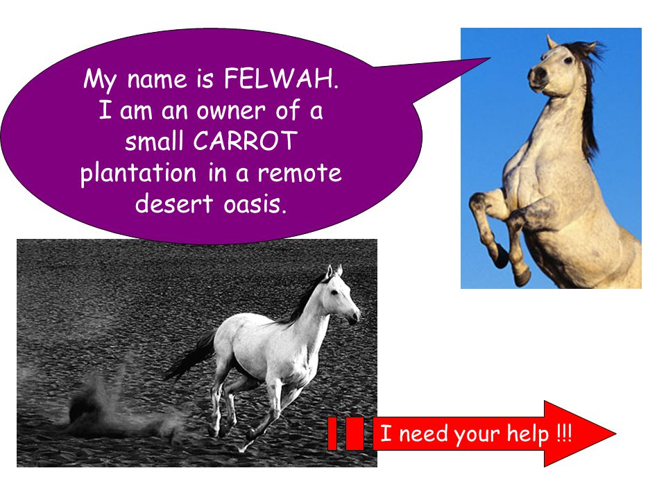 My name is FELWAH. I am an owner of a small CARROT plantation in a remote desert oasis.