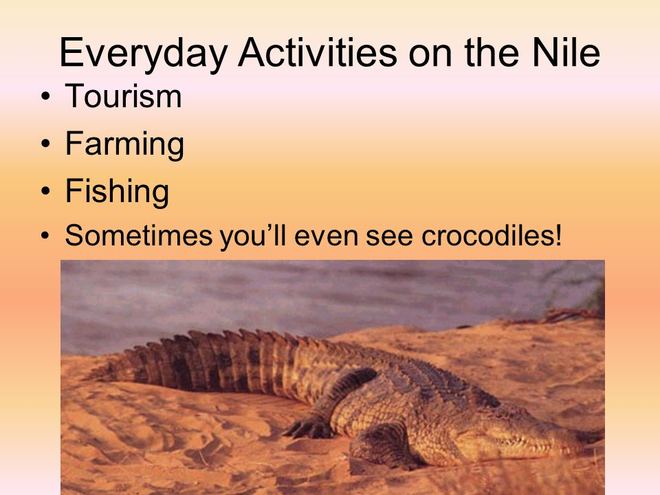 Everyday Activities on the Nile Tourism Farming Fishing Sometimes you'll even see crocodiles!