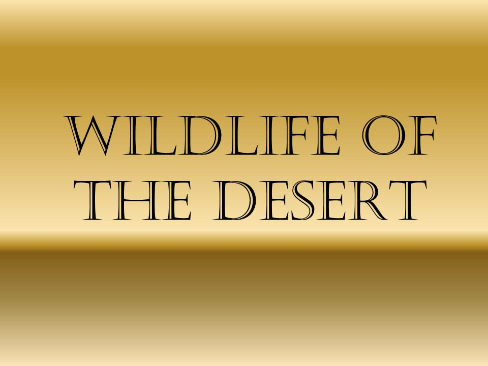 Wildlife of the Desert