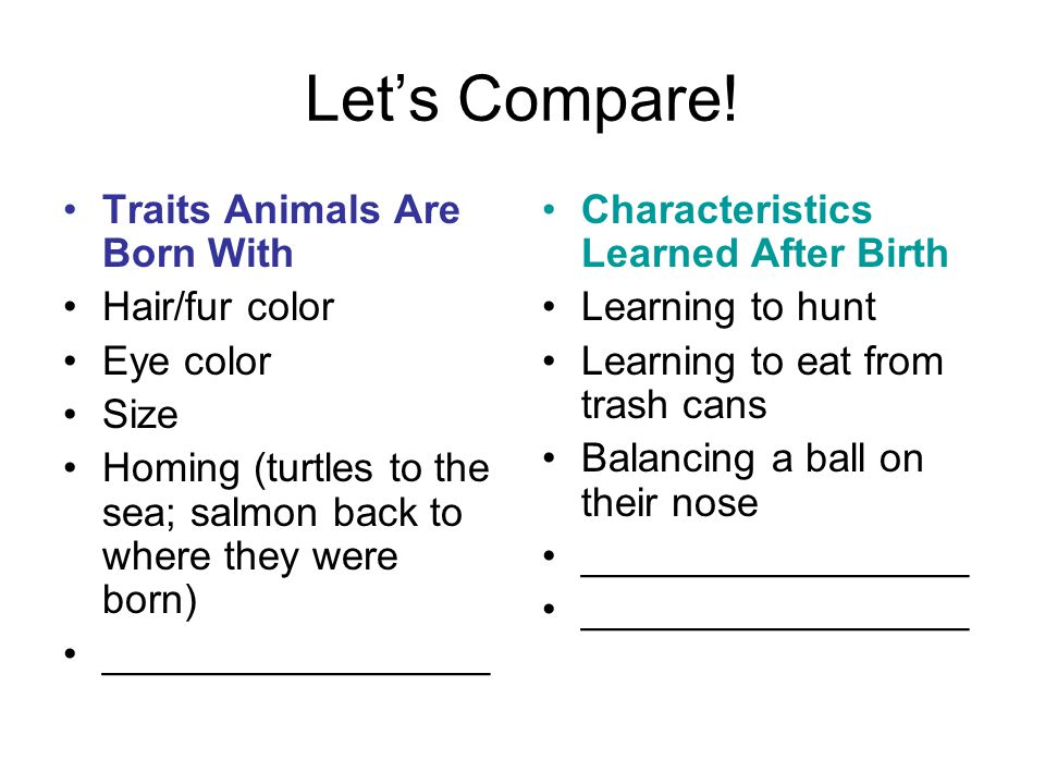 Let's Compare! Traits Animals Are Born With Hair/fur color Eye color Size Homing (turtles to the sea; salmon back to where they were born) ___________