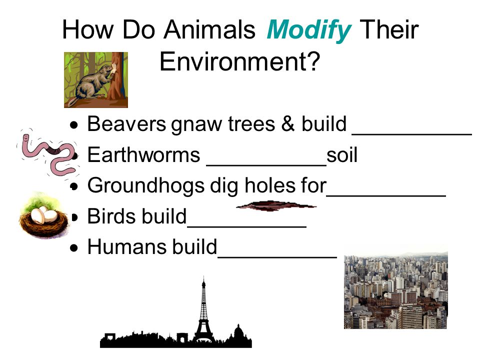 How Do Animals Modify Their Environment?  Beavers gnaw trees & build __________  Earthworms __________soil  Groundhogs dig holes for__________  Bi