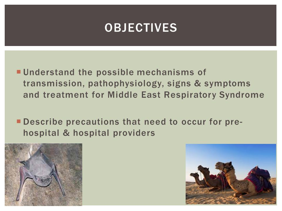 MERS-nCoV: Mechanism of Transmission  Identified in September 2012  Similar to coronaviruses found in bats  Isolated in camels in Qatar, Egypt and Saudi Arabia-unknown if camels are the source of the virus  Human to human infection in health care workers noted  Lab test for active infection and antibody test for previous infection