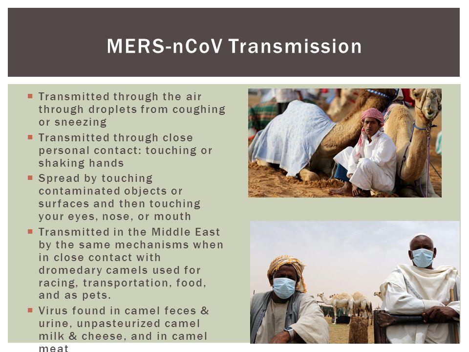 MERS-nCoV Transmission  Transmitted through the air through droplets from coughing or sneezing  Transmitted through close personal contact: touching or shaking hands  Spread by touching contaminated objects or surfaces and then touching your eyes, nose, or mouth  Transmitted in the Middle East by the same mechanisms when in close contact with dromedary camels used for racing, transportation, food, and as pets.