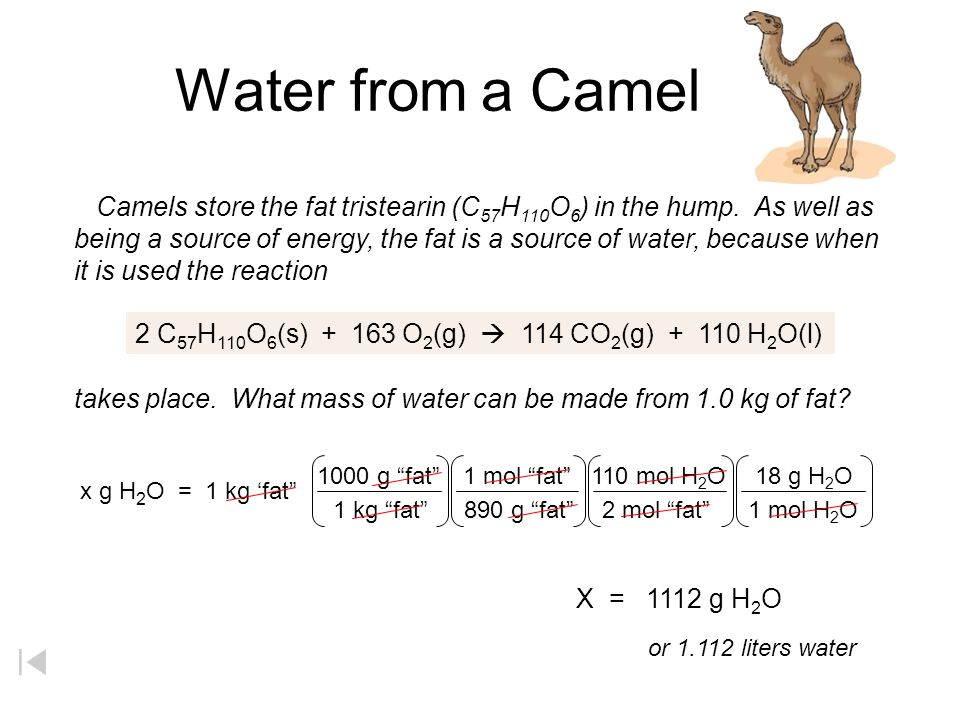 Water from a Camel Camels store the fat tristearin (C 57 H 110 O 6 ) in the hump.
