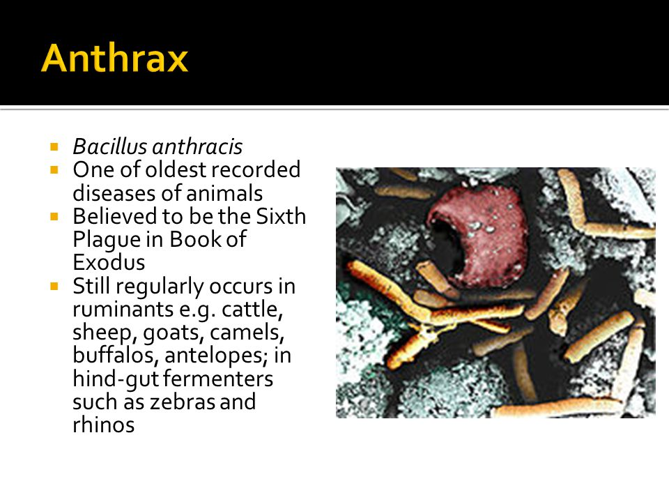  Found to have 2 forms of disease  Inhalational anthrax  Cutaneous anthrax