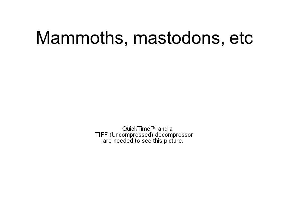 Mammoths, mastodons, etc