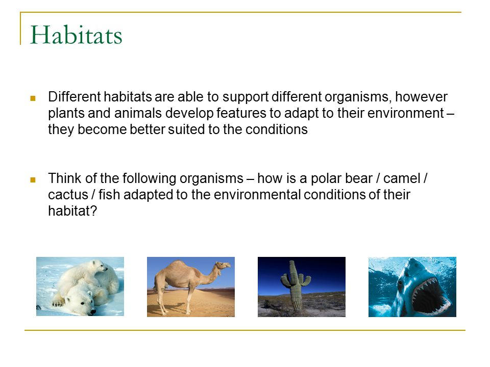 Adaptations A habitat is only populated by organisms that are adapted to survive there Adaptations are special features or behaviours that make an organism particularly suited to its environment – adaptations are a part of the evolutionary process Why is it important that living things are adapted to their environment.
