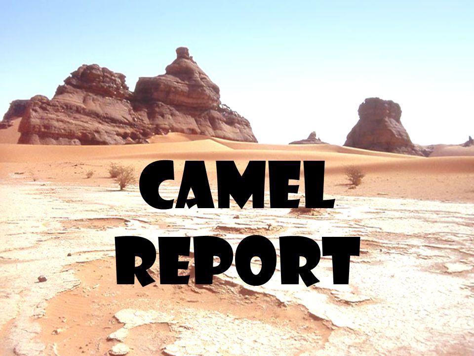 Camel report
