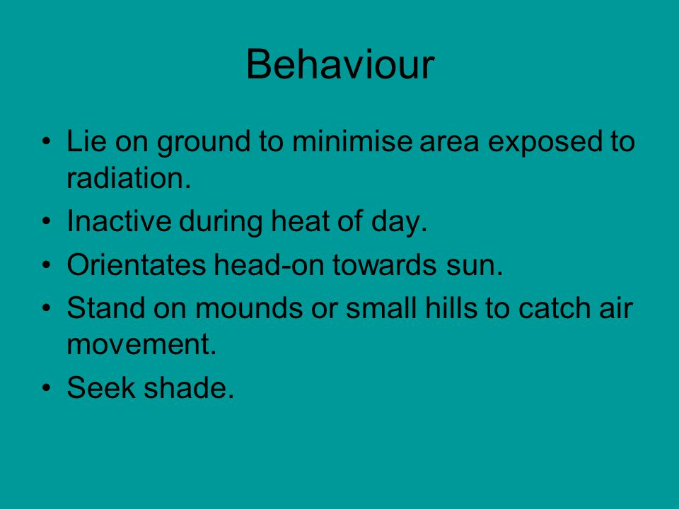 Behaviour Lie on ground to minimise area exposed to radiation.