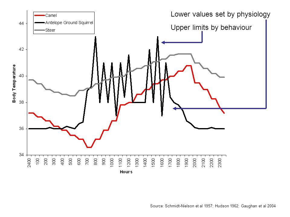 Source: Schmidt-Nielson et al 1957; Hudson 1962; Gaughan et al 2004 Lower values set by physiology Upper limits by behaviour