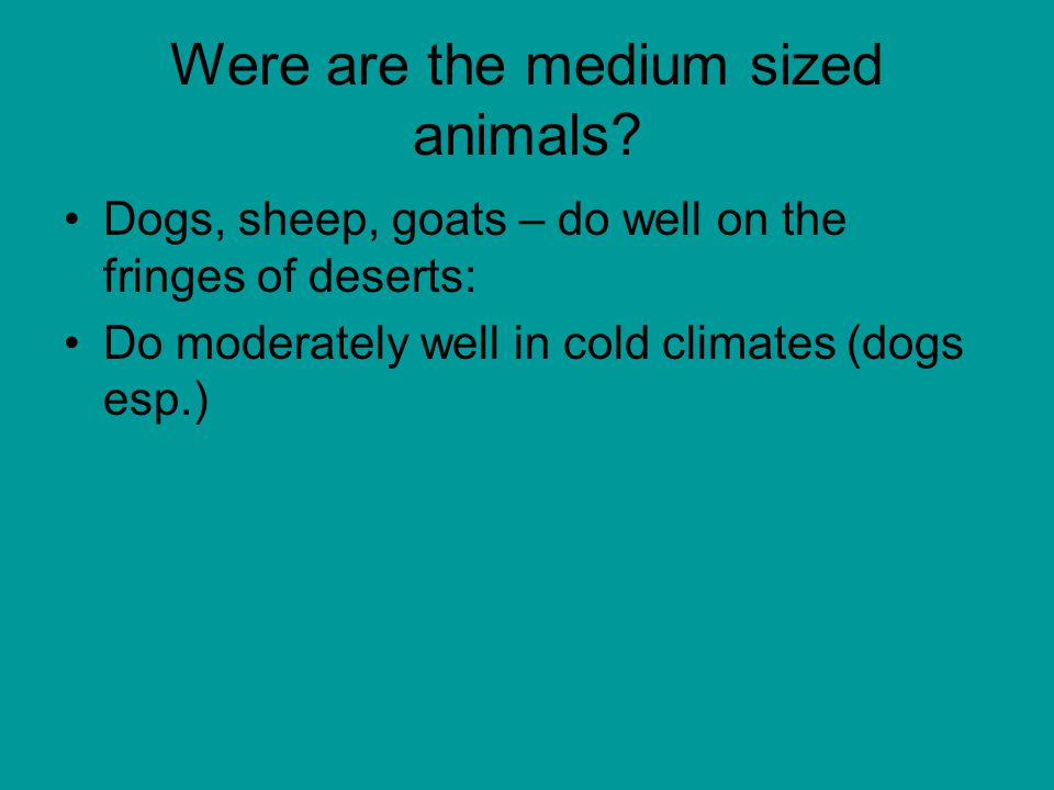 Were are the medium sized animals.
