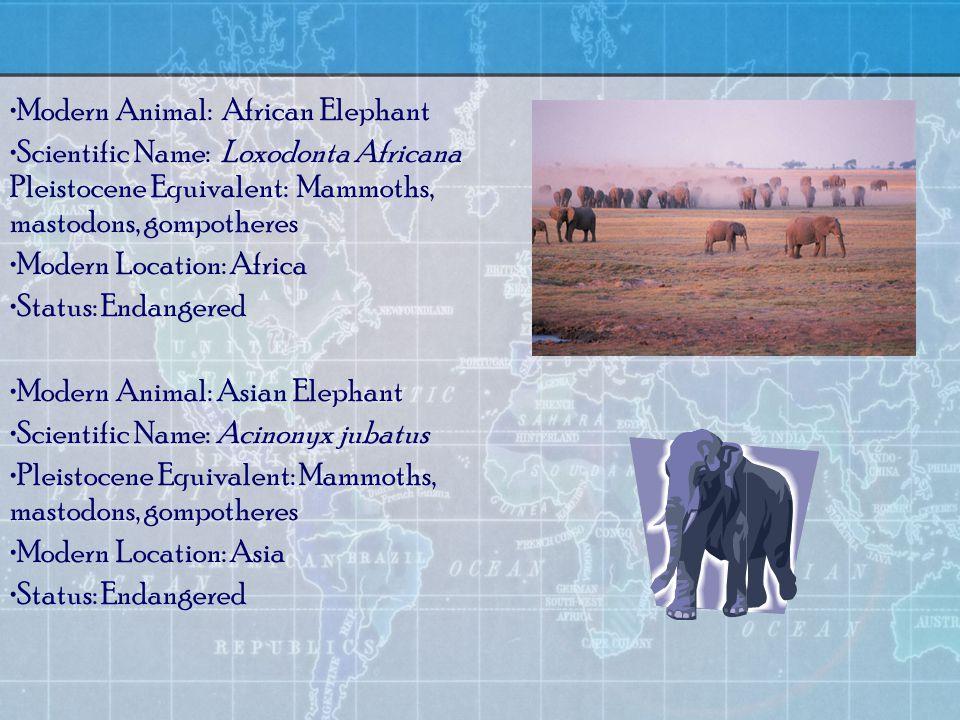 Modern Animal: African Elephant Scientific Name: Loxodonta Africana Pleistocene Equivalent: Mammoths, mastodons, gompotheres Modern Location: Africa Status: Endangered Modern Animal: Asian Elephant Scientific Name: Acinonyx jubatus Pleistocene Equivalent: Mammoths, mastodons, gompotheres Modern Location: Asia Status: Endangered