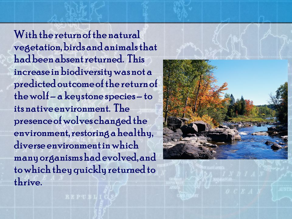 With the return of the natural vegetation, birds and animals that had been absent returned.