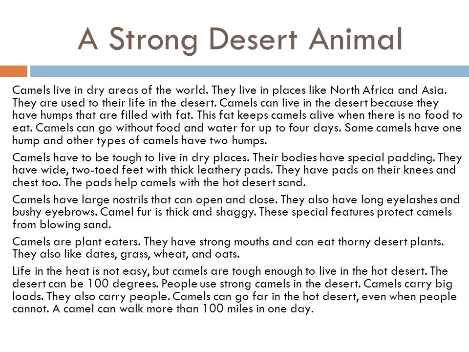 A Strong Desert Animal Camels live in dry areas of the world. They live in places like North Africa and Asia. They are used to their life in the deser