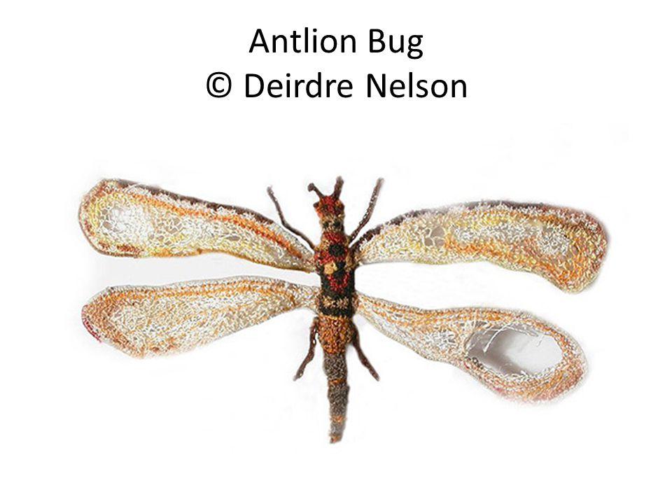 Antlion Bug © Deirdre Nelson