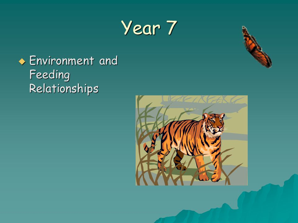 Year 7  Environment and Feeding Relationships