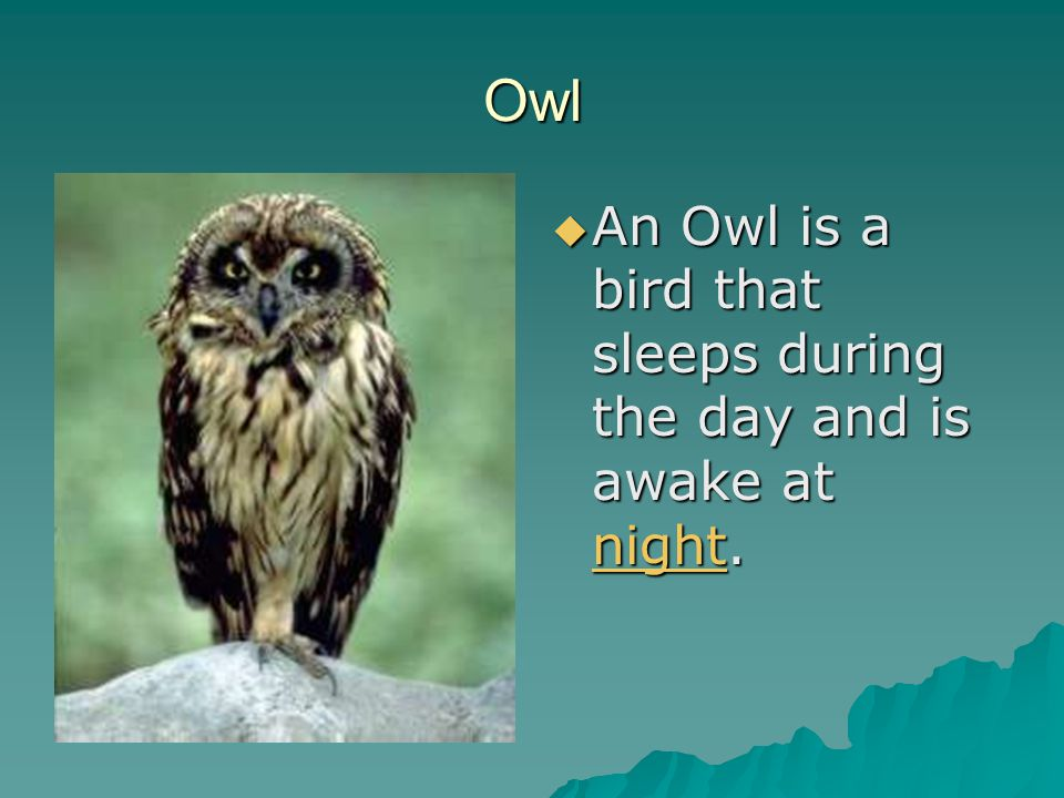 Owl  An Owl is a bird that sleeps during the day and is awake at night. night