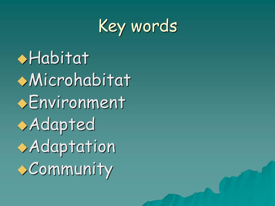 Key words  Habitat  Microhabitat  Environment  Adapted  Adaptation  Community