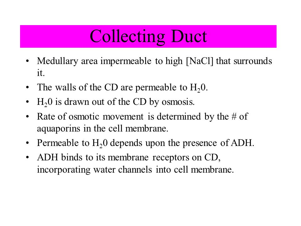 Collecting Duct Medullary area impermeable to high [NaCl] that surrounds it. The walls of the CD are permeable to H 2 0. H 2 0 is drawn out of the CD