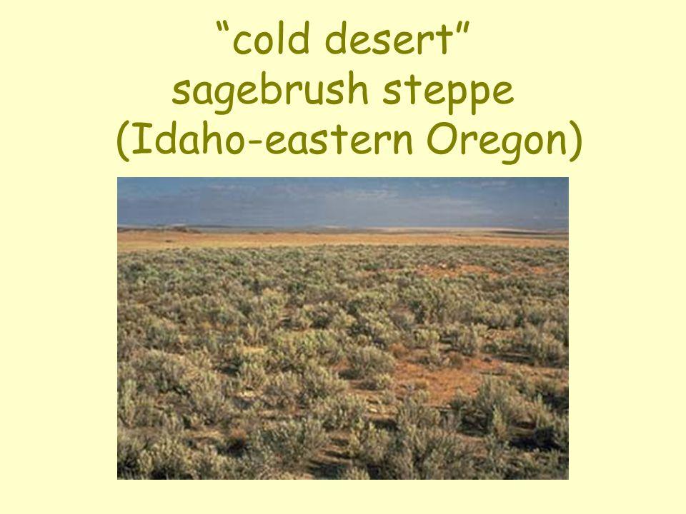 """cold desert"" sagebrush steppe (Idaho-eastern Oregon)"