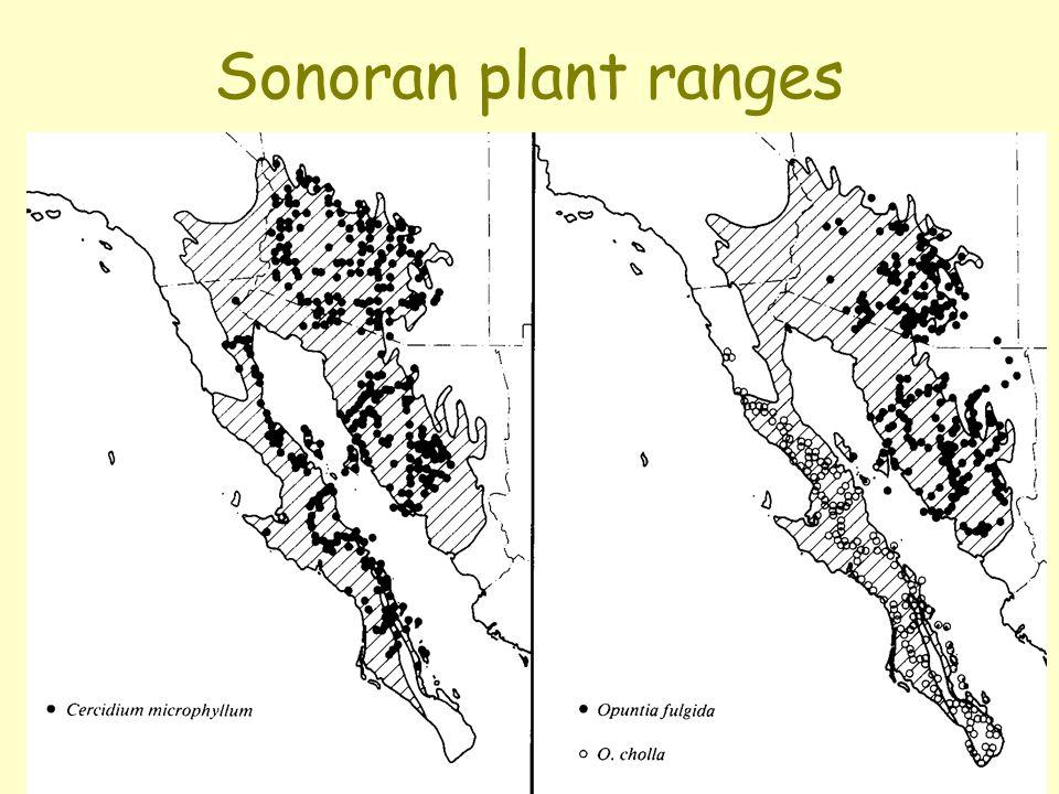 Sonoran plant ranges