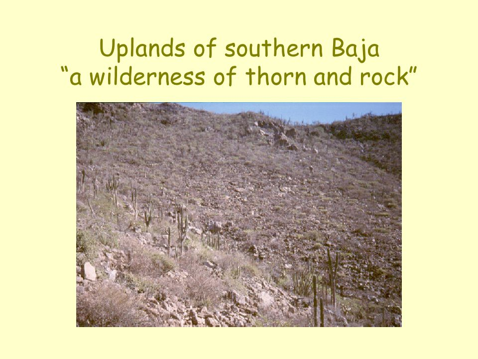 """Uplands of southern Baja """"a wilderness of thorn and rock"""""""