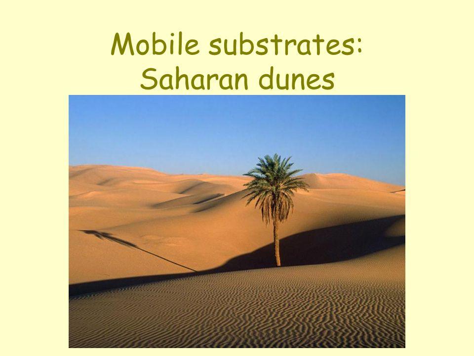 Mobile substrates: Saharan dunes