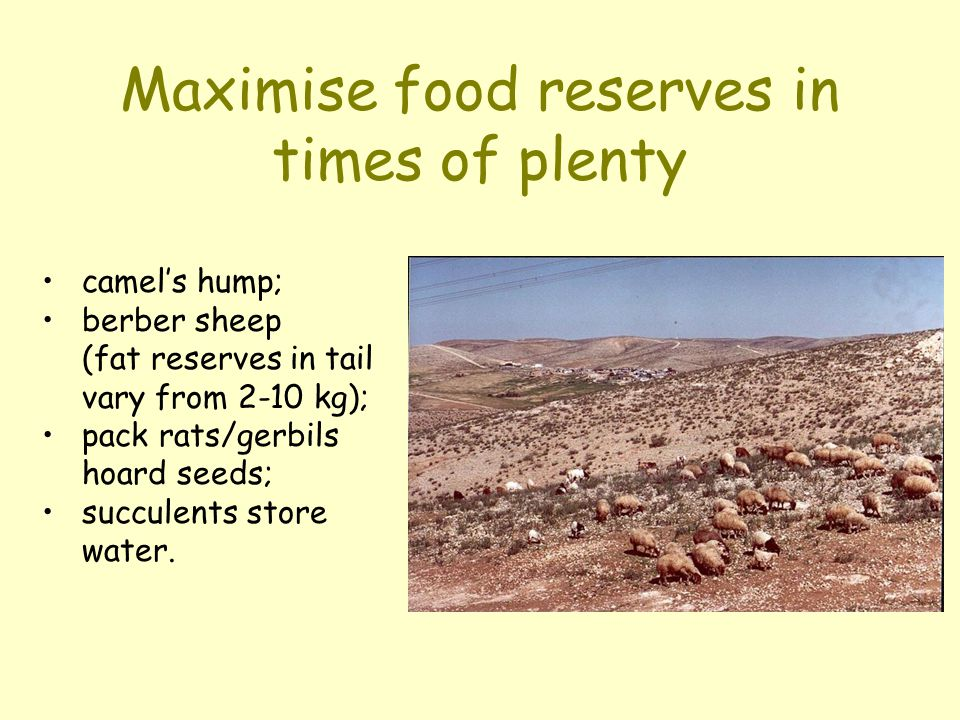 Maximise food reserves in times of plenty camel's hump; berber sheep (fat reserves in tail vary from 2-10 kg); pack rats/gerbils hoard seeds; succulen